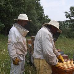 desarrollo-personal-curso-de-apicultura