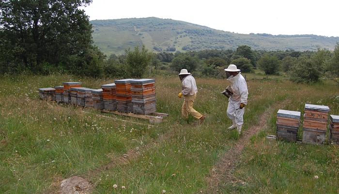 actividades-en-la-naturaleza-montana-palentina-ruta de las abejas